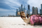 3*  Rove at The Park- Dubai Package (5 nights)