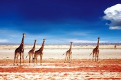 Namibia Guided Tour- Windhoek to Etosha National Park -(4 Nights /5Days)
