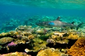 Cairns & The Great Barrier Reef - Australia - 3 Nights
