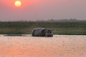 4* Chobe Bush Lodge - Botswana - 2 Nights  Promo Package