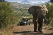 Bakubung Bush Lodge - Pilanesberg National Park (2 Nights)