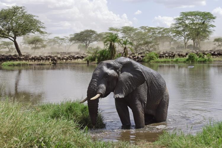 Tanzania- Serengeti