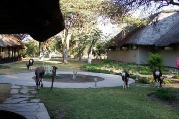 Mokuti Etosha Lodge - Namibia - 3 Nights
