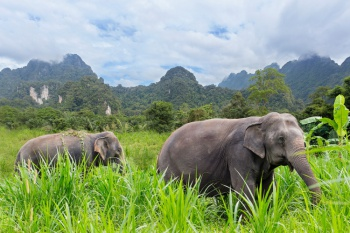 Elephant Hills & 5* The Sarojin Combo - Thailand (7 Nights)