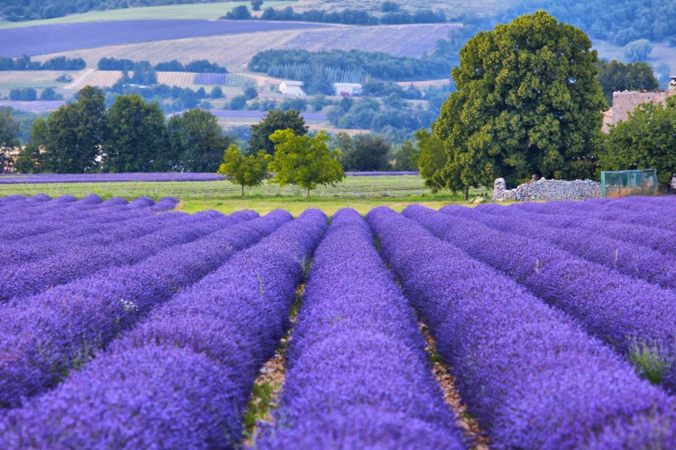 Burgundy and Provence