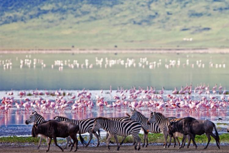 Serena Safari - Kenya