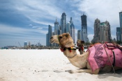 3* Ibis Mall of the Emirates Hotel - Dubai Package  (6  Nights)