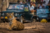3* Golden Triangle With Ranthambore Tour - India (7 Nights)