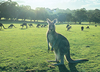 The Outback Railway - Australia (5 Nights)